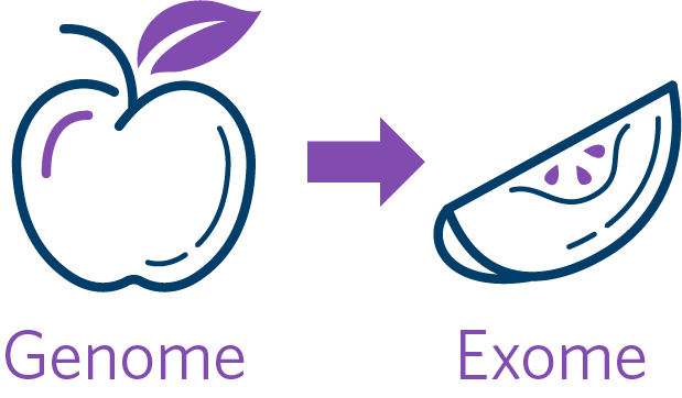 genome exome icon